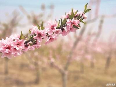 【四月你好】+春天的花儿