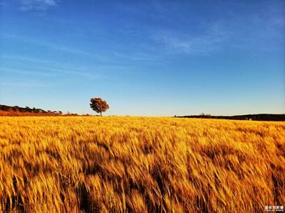 【阳光的味道】+夕阳下的田野