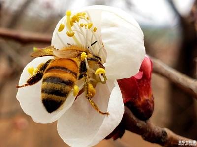 忙碌的小蜜蜂
