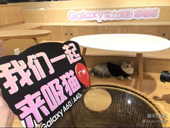 【Galaxy实力宠粉】白云万达三星体验店&邂逅猫活动精彩分享