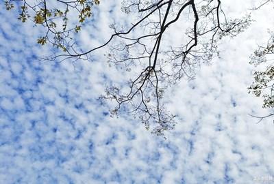 【向往的天空】+白云