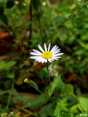 【花开盛夏】+花的美7