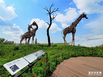 北京世界园艺博览会之四