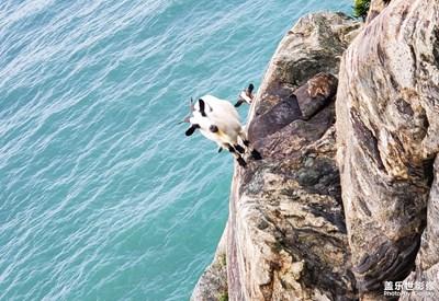 【尘安与海】悬崖上的山羊(无修原图)