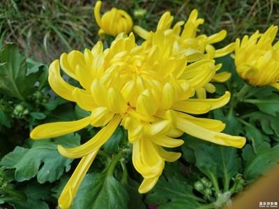 【欢度十一】+金秋十月的花