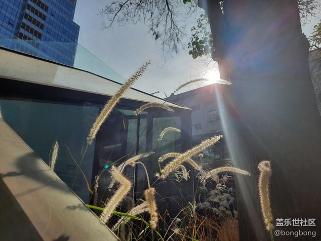 秋日的午后时光~ Galaxy A50s拍照体验