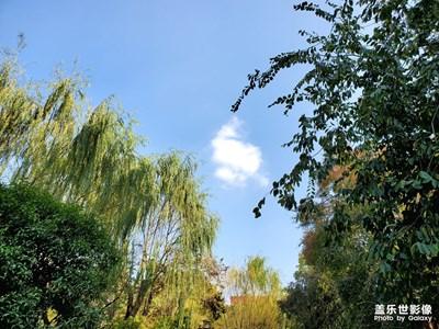 【晚秋光影】随拍秋的天