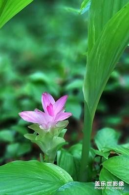 花卉随拍(4)