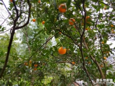 【缤纷世界】+桔子