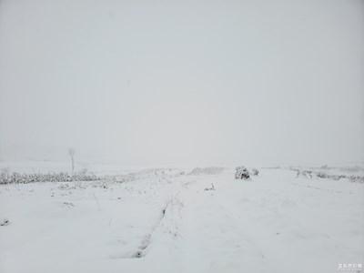 多年一遇的家乡雪景