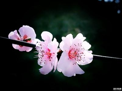 春天的渴望