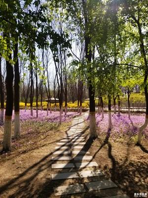 【盖乐世影像周赛第133期】——赏春