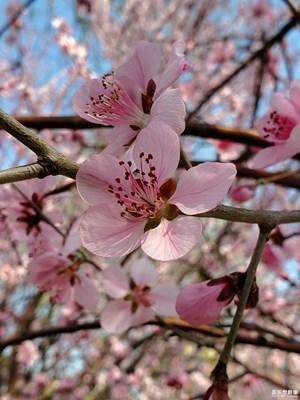 【赏春】+你若盛开