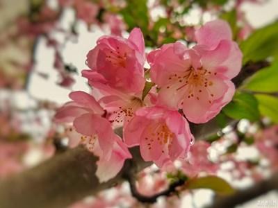 【春花烂漫】+初春赏花