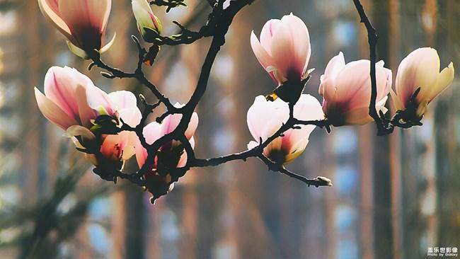 《每周星鲜事》第24期:春暖花开