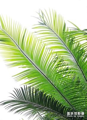 最古老的植物——蘇鐵