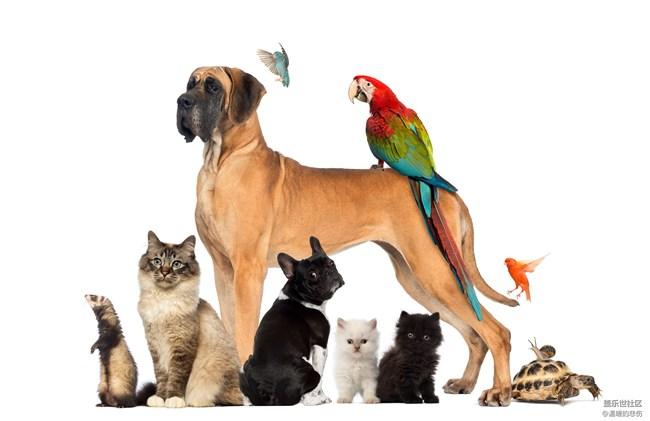 已开奖【10月宠物活动第二期】-你最想养的宠物是什么
