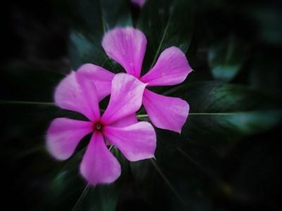 【花花世界】+花花的世界