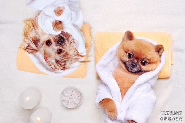 已开奖【11月宠物活动第一期】-双十一你家宠物的囤货清单