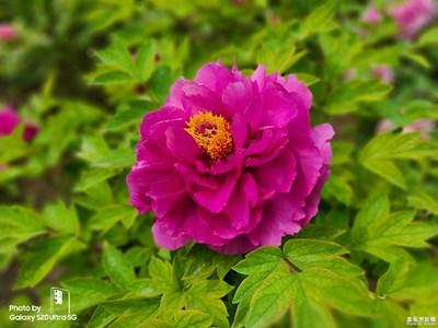 【遇见美好】+花开富贵