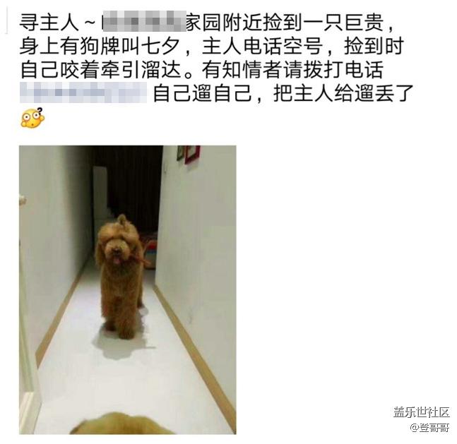 【宠物7月第二期】有没有经历过宠物走丢,或者失而复得?