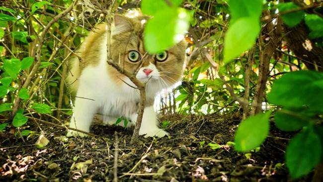猫的成长历程(二)